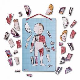 Body magnet - L'anatomie 12 langues - Janod